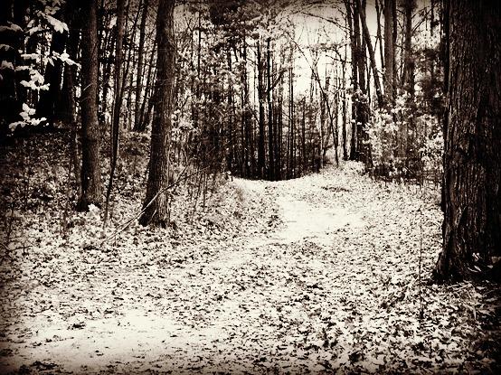 autumn woods FS urbanejpg